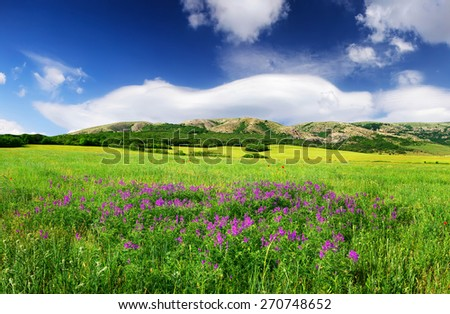 Field with flowers in mountain valley. Natural summer landscape - stock photo