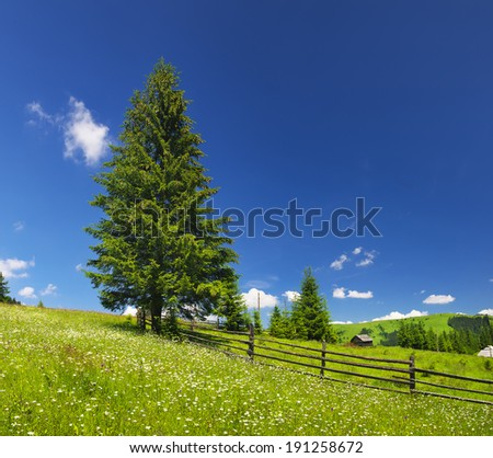 Field with flowers in the summer time. Beautiful natural landscape - stock photo