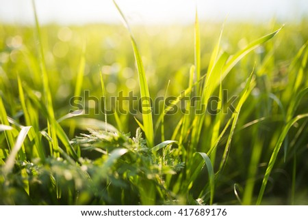 field with fresh spring grass - stock photo