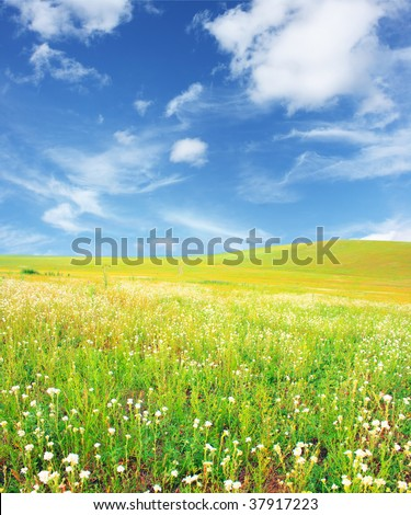 Field with grass and blue sky