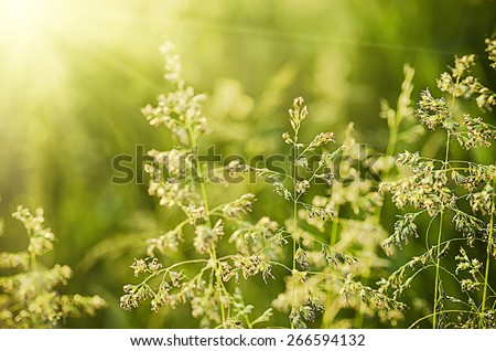 Field with green sunny plants at spring time, soft focus, natural seasonal background - stock photo