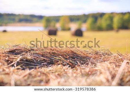 Field with hay bales. - stock photo