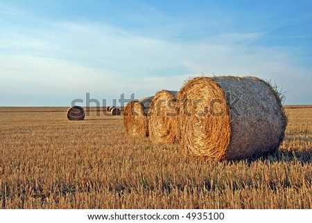 Field with straw rolls after the harvest