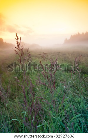 Field with sun and fog in the background. Late even in Finland.