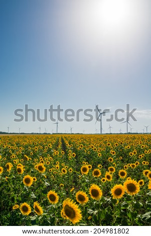 Field with sunflowers and eco power, wind turbines with sun