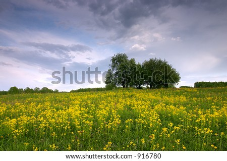Field, yellow flowers, trees and clouds - stock photo