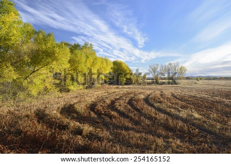 Fields and Colorful Cottonwoods in Autumn  - stock photo