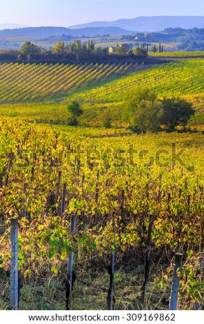 Fields and vineyards in Italy - stock photo