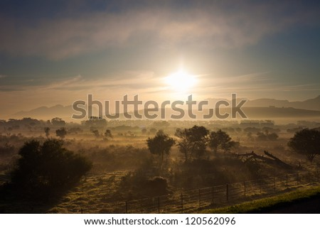 Fields at dawn near Cape Town, South Africa - stock photo