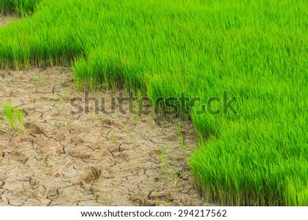Fields - Fields drought - stock photo