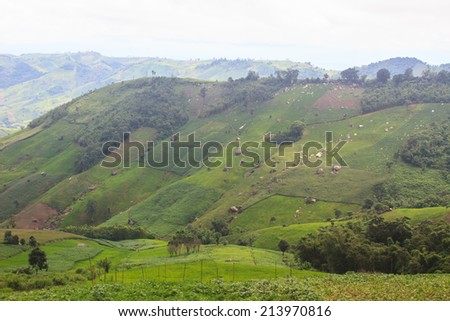 fields in the mountains, agricultural fields view - stock photo
