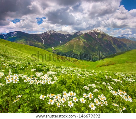 Fields of flowers in the mountains. Georgia, Svaneti. - stock photo