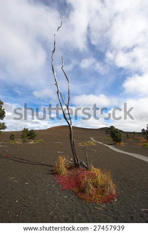 Fields of lava and a tree in Hawaii Volcanoes National Park