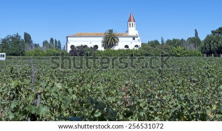 Fields of vineyards in central Chile. Growing grapes for industrial use: wine. The Chilean wine industry is the 7th world producer and the biggest exporter of South America. - stock photo
