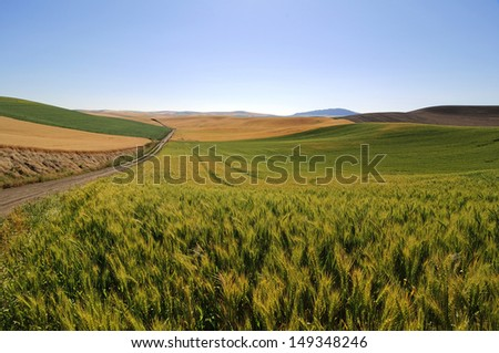 fields of wheat, barley and soybean along a country road - stock photo