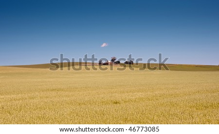 fields of wheat in the countryside at burra south australia