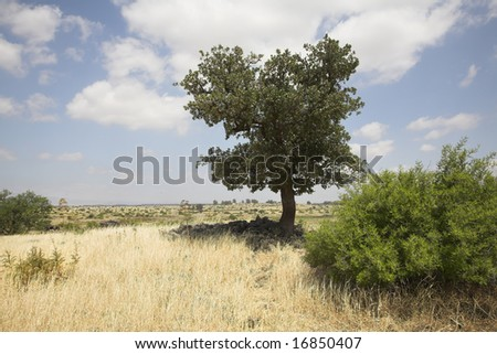 Fields with a yellow dry grass and a tree on a background of the cloudy sky - stock photo