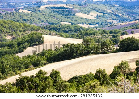 fields with trees, Provence, France - stock photo