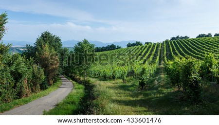 Fields with vineyards,  Italian landscape in Tuscany - stock photo