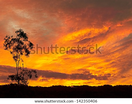 Fiery Australian sunset silhouette late evening background - stock photo