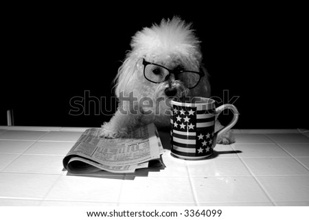 Fifi our Bichon Frise is shaken up at the news she reads about her stock