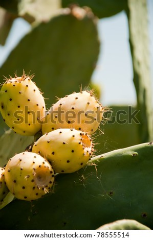fig prickly pear - stock photo