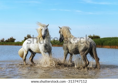 Fight of horses - stock photo