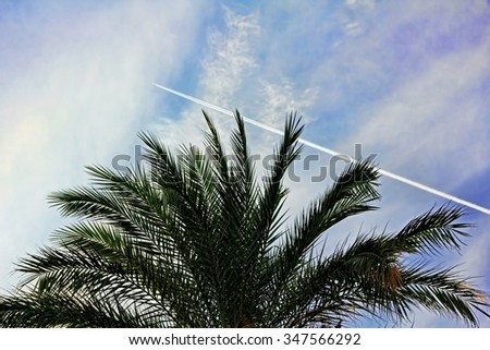 Fighter aircraft fuel trace in the turkish blue sky over palm tree. - stock photo