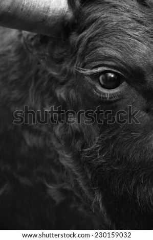 Fighting bull head detail in black and white. Vertical - stock photo
