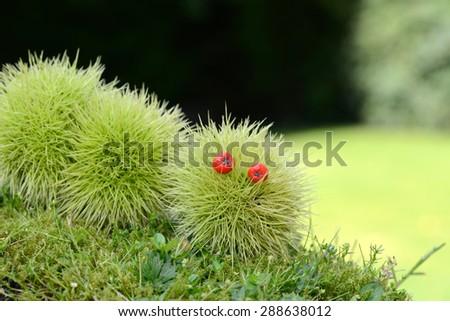 figure of sweet chestnut - stock photo