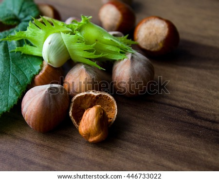 filbert, hazelnut green - stock photo