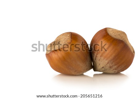Filbert nut isolated on a white background