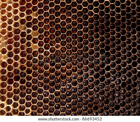 Filled honeycomb