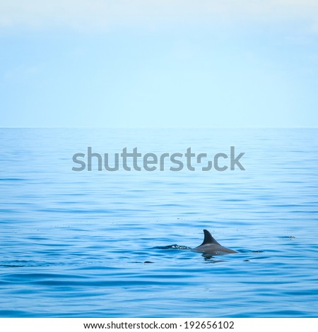 Fin of a dolphin in the high sea - stock photo