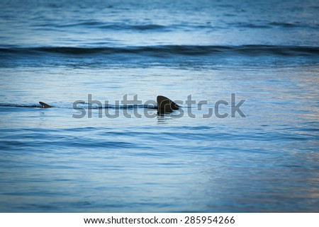 Fin of a shark in the high sea. - stock photo