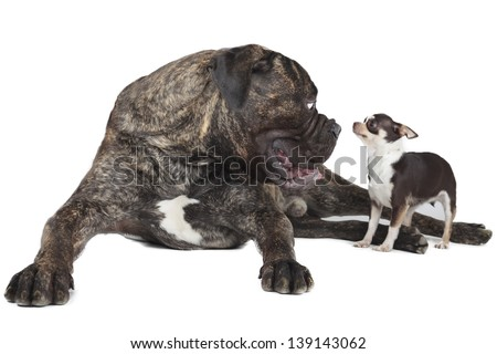 find similar images Miss you or forgive me concept - lying puppy - stock photo