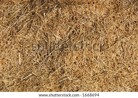 find the needle in a haystack - stock photo