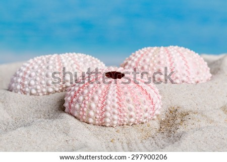 Fine detail of pink textured sea urchin skeletons - stock photo