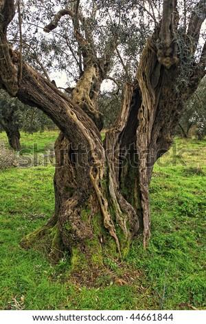 Creepy Fairytale Tree Spooky Forest Fog Stock Photo