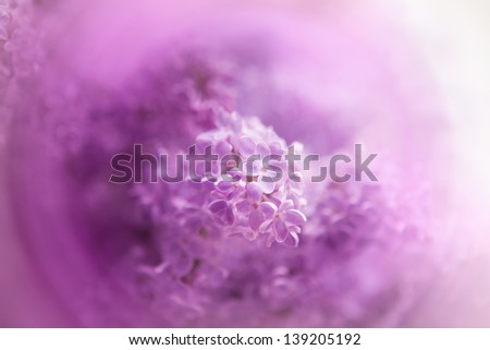 fine texture made �¢??�¢??of purple lilac flowers - stock photo