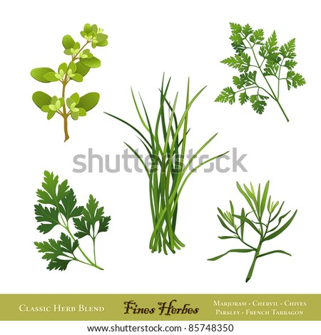 Fines Herbes. Traditional French herb blend for cooking: Sweet Marjoram, Chives, Chervil, Italian Flat Leaf Parsley, French Tarragon, isolated on white. - stock photo