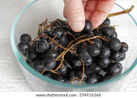 Fingers selecting freshly washed black organic grapes from a clear glass bowl set on a paper towel up close. Adult white male fingers choosing a few black grapes.