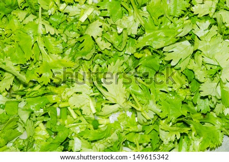 Finished cut coriander for cooking