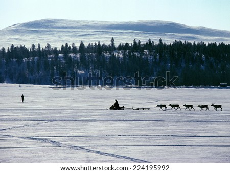 Finland, snowmobile and reindeer in silhouette - stock photo