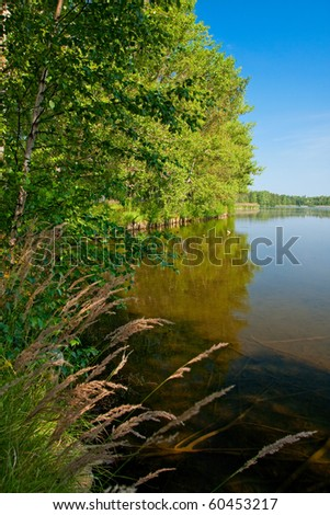 Finnish landspace: Lake and trees on the shore with reed - stock photo