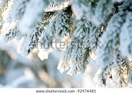 Fir branch covered with snow; winter landscape - stock photo