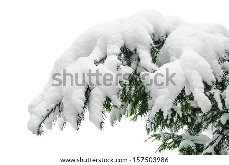 Fir branch heavily covered with fresh snow on pure white background - stock photo