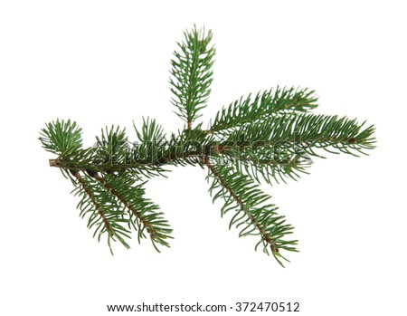 Fir branch, isolated on white - stock photo