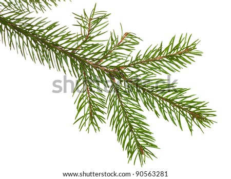 Fir branch isolated over the white background - stock photo