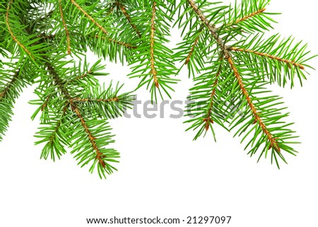 Fir branch isolated over white background